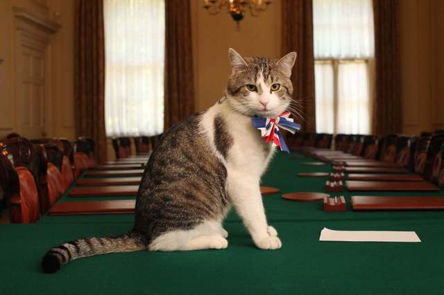 Larry_Chief_Mouser[1].jpg
