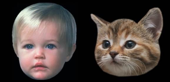 baby-kitten.jpg