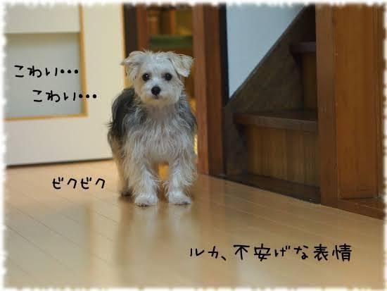imagesMHBS1Z0V.jpg