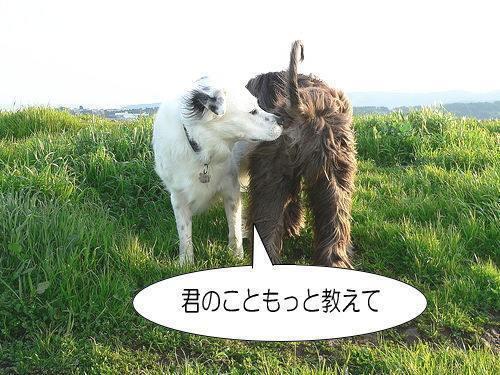 sniff_a.jpg